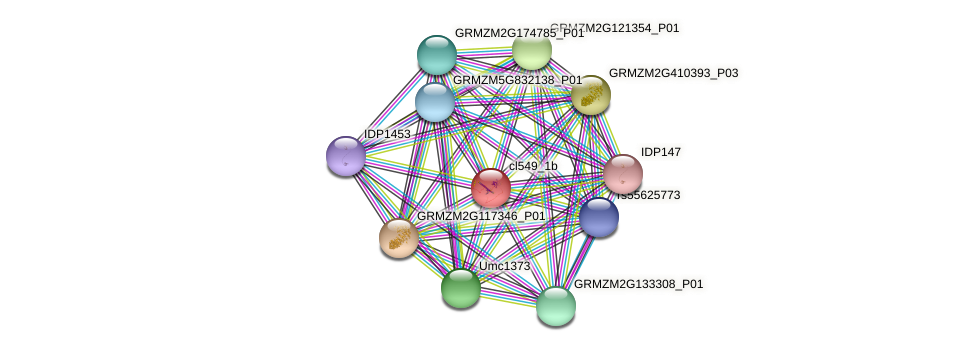 cl549_1b protein (Zea mays) - STRING interaction network