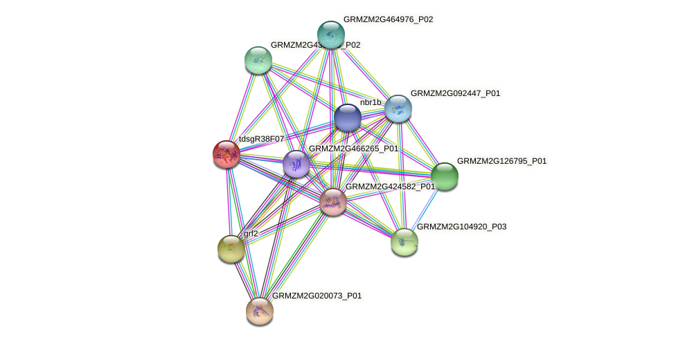 GRMZM2G145045_P01 protein (Zea mays) - STRING interaction network