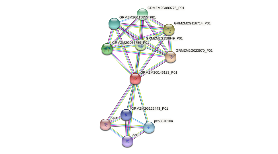 GRMZM2G145123_P01 protein (Zea mays) - STRING interaction network
