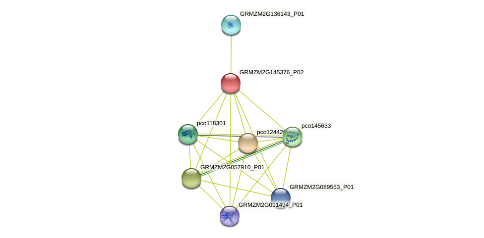 GRMZM2G145376_P02 protein (Zea mays) - STRING interaction network