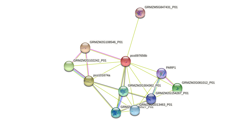 pco097656b protein (Zea mays) - STRING interaction network
