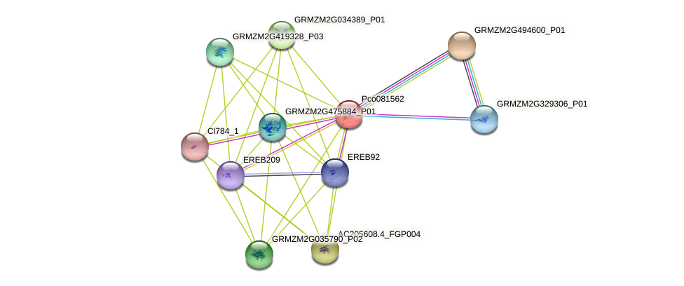 100281240 protein (Zea mays) - STRING interaction network
