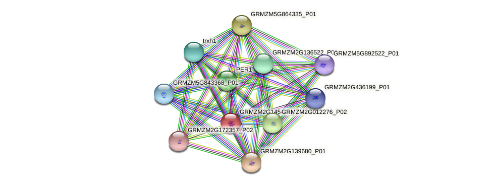 GRMZM2G145449_P01 protein (Zea mays) - STRING interaction network