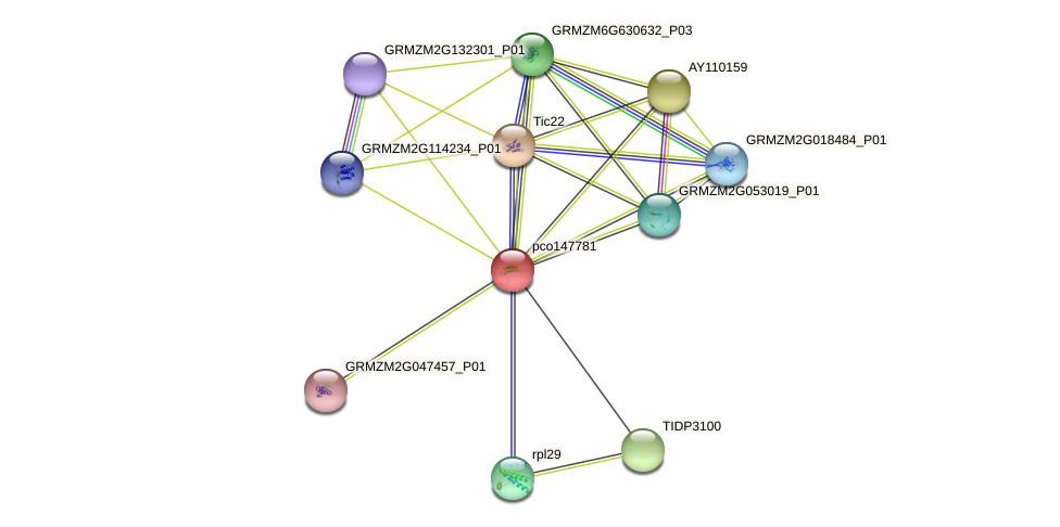pco147781 protein (Zea mays) - STRING interaction network