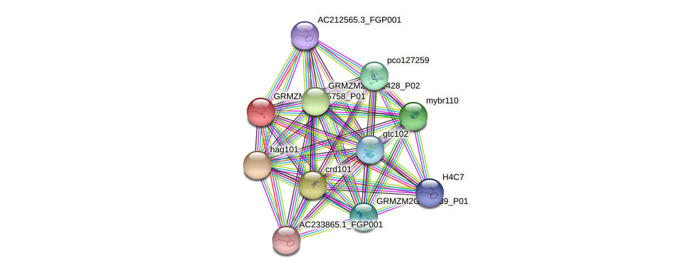 Zm.65649 protein (Zea mays) - STRING interaction network