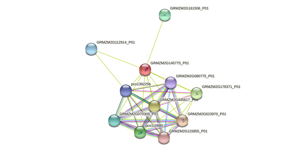 GRMZM2G145775_P01 protein (Zea mays) - STRING interaction network