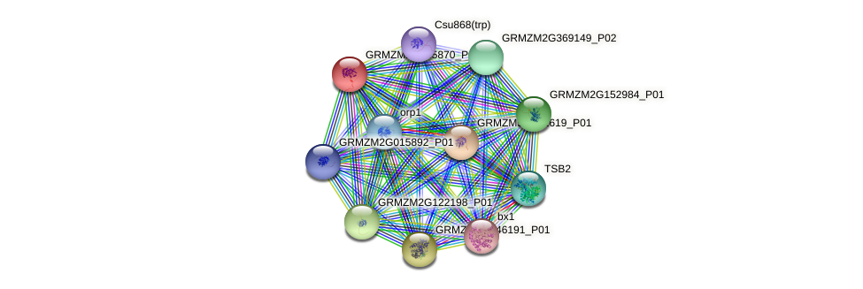GRMZM2G145870_P01 protein (Zea mays) - STRING interaction network