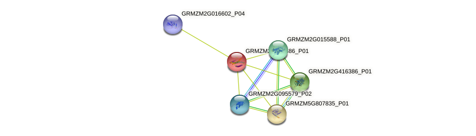 GRMZM2G145886_P01 protein (Zea mays) - STRING interaction network