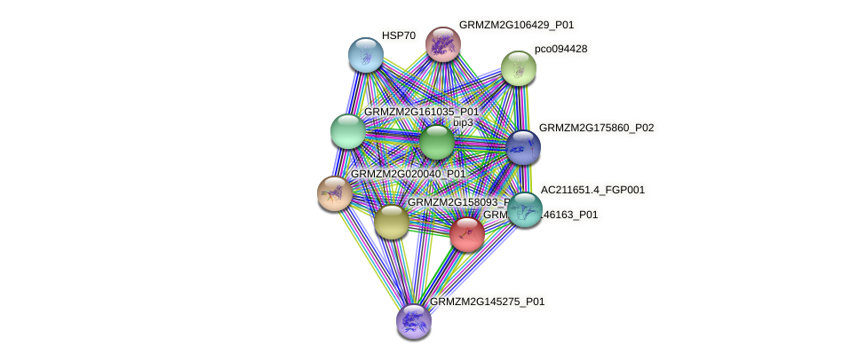 GRMZM2G146163_P01 protein (Zea mays) - STRING interaction network
