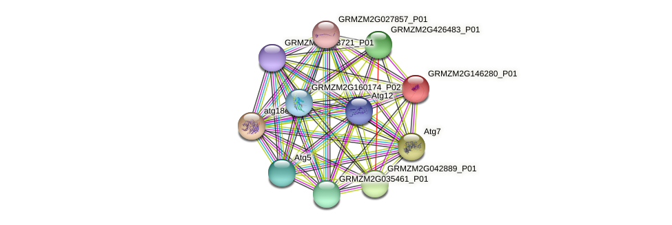 GRMZM2G146280_P01 protein (Zea mays) - STRING interaction network