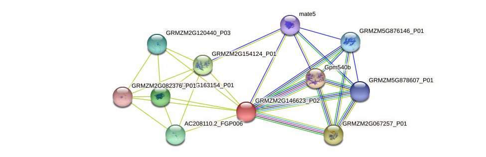 GRMZM2G146623_P02 protein (Zea mays) - STRING interaction network