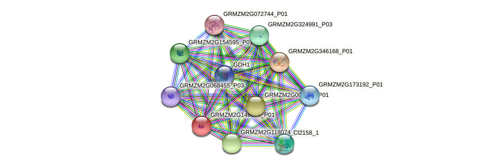 GRMZM2G146677_P01 protein (Zea mays) - STRING interaction network