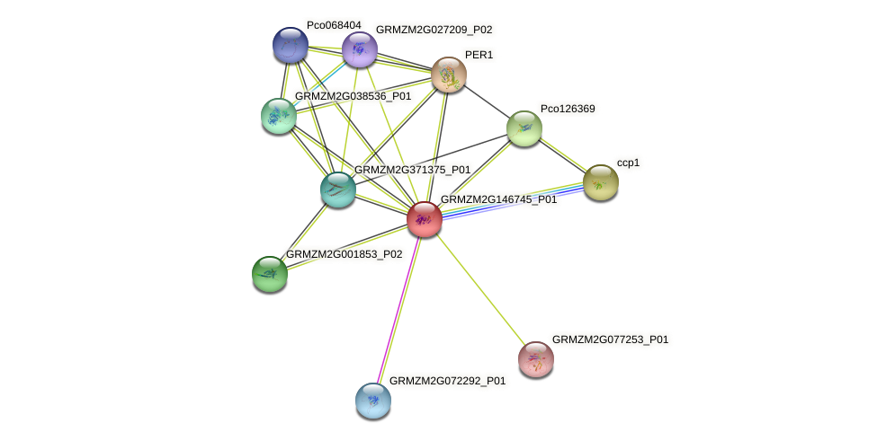 Zm.86345 protein (Zea mays) - STRING interaction network