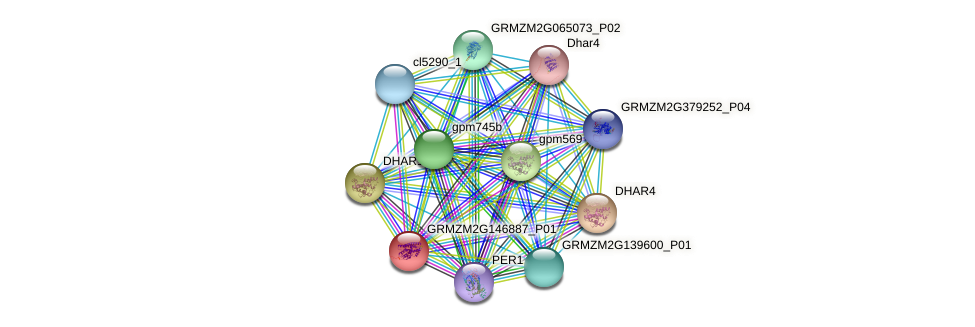 GRMZM2G146887_P01 protein (Zea mays) - STRING interaction network