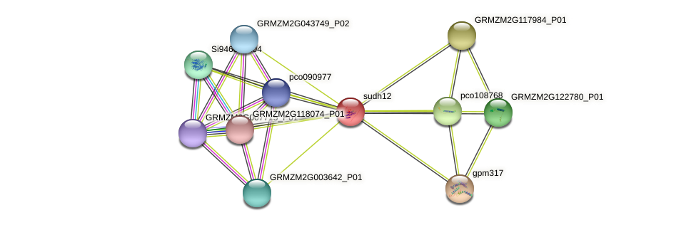 GRMZM2G146965_P01 protein (Zea mays) - STRING interaction network