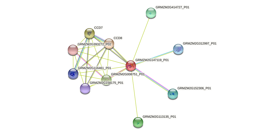 GRMZM2G147119_P01 protein (Zea mays) - STRING interaction network