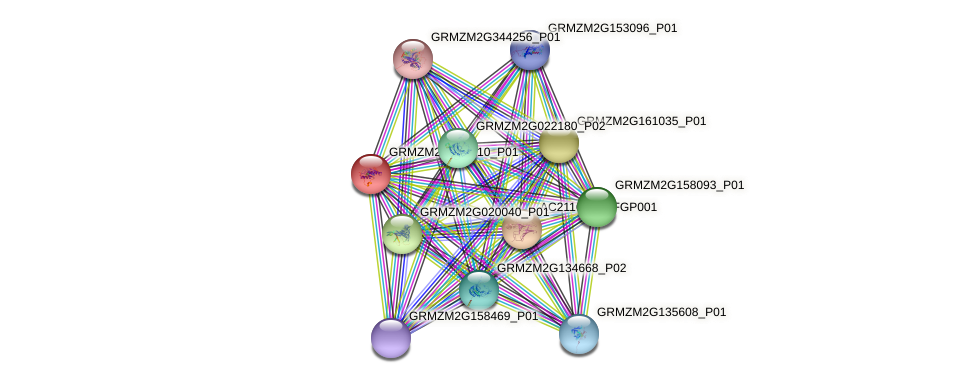 GRMZM2G147210_P01 protein (Zea mays) - STRING interaction network