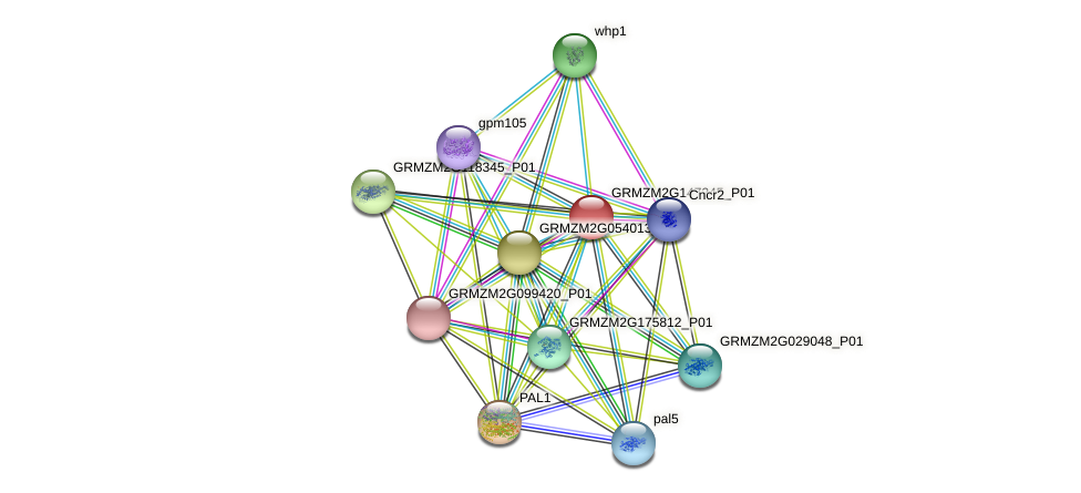 GRMZM2G147245_P01 protein (Zea mays) - STRING interaction network