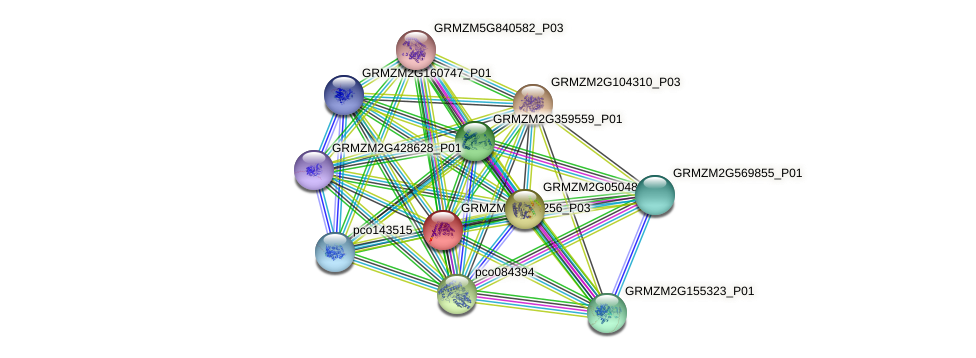 GRMZM2G147256_P03 protein (Zea mays) - STRING interaction network