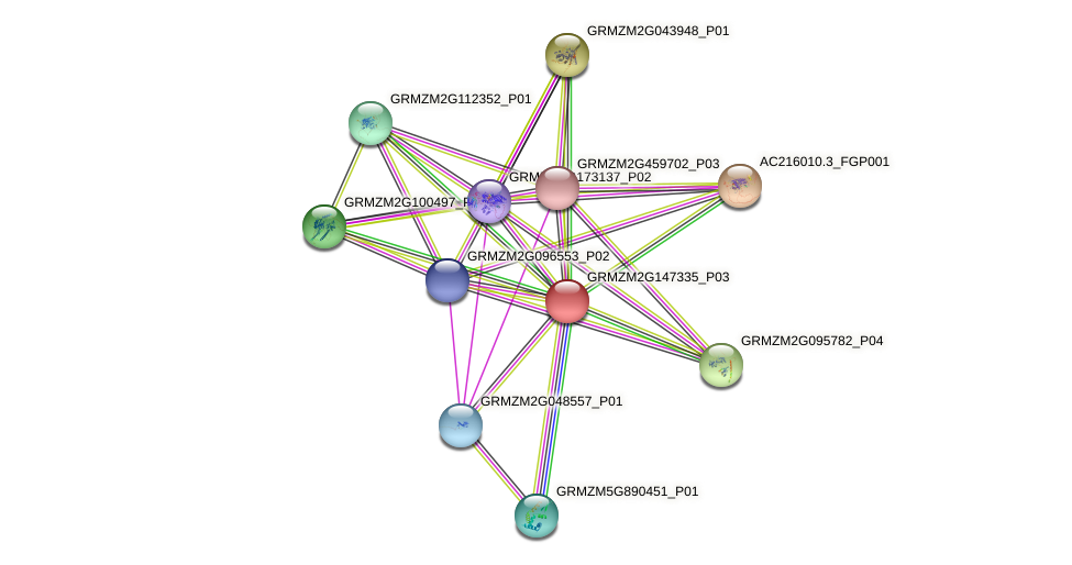 GRMZM2G147335_P03 protein (Zea mays) - STRING interaction network