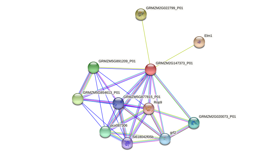 GRMZM2G147373_P01 protein (Zea mays) - STRING interaction network