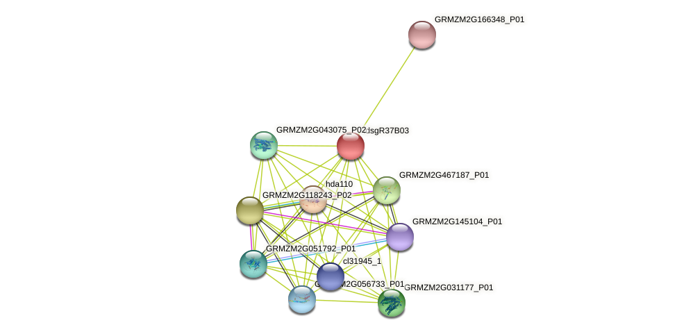 GRMZM2G147481_P01 protein (Zea mays) - STRING interaction network