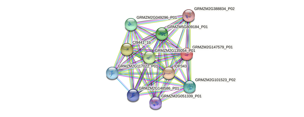 GRMZM2G147579_P01 protein (Zea mays) - STRING interaction network