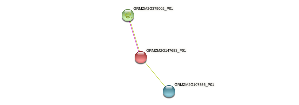GRMZM2G147683_P01 protein (Zea mays) - STRING interaction network
