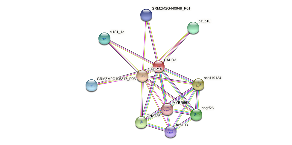 CADR3 protein (Zea mays) - STRING interaction network