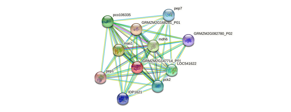 GRMZM2G147714_P01 protein (Zea mays) - STRING interaction network