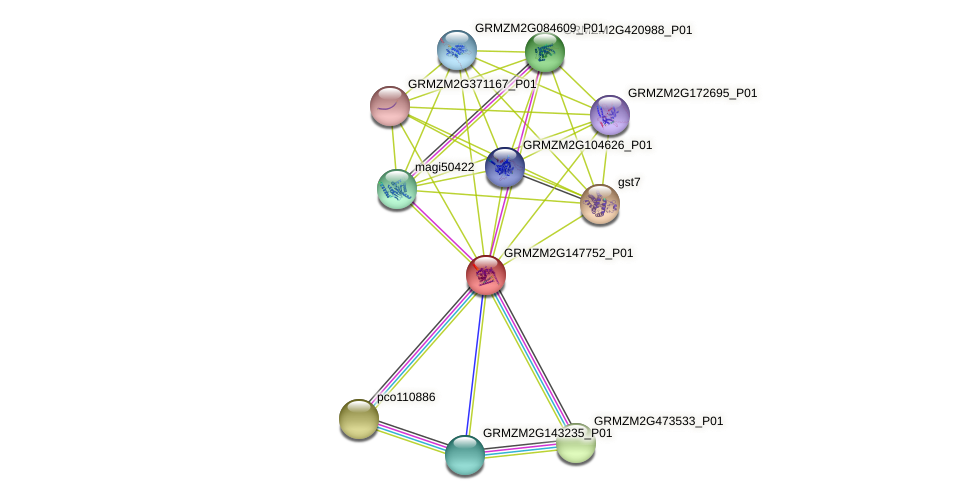 GRMZM2G147752_P01 protein (Zea mays) - STRING interaction network