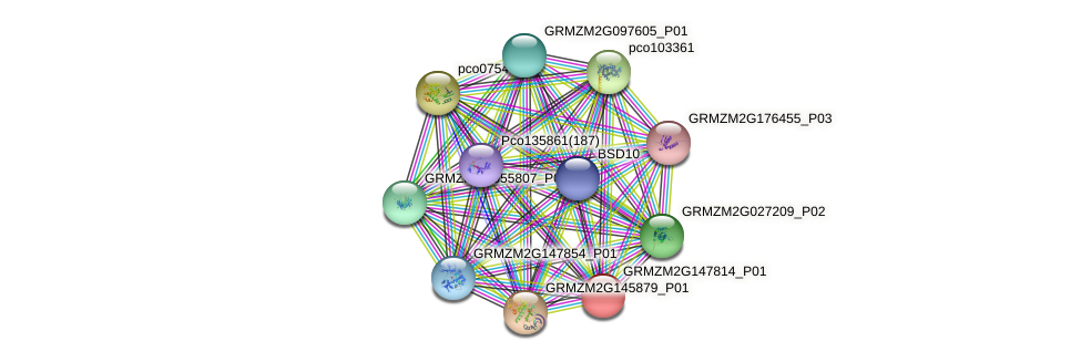 GRMZM2G147814_P01 protein (Zea mays) - STRING interaction network