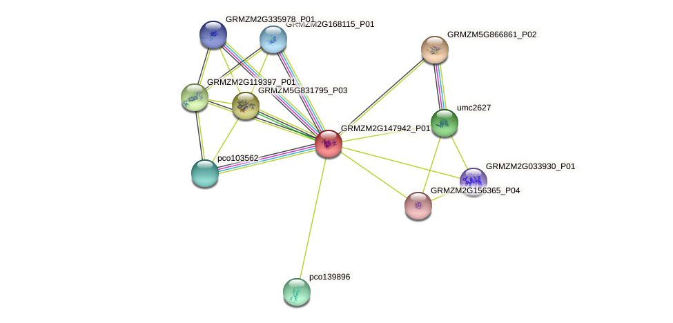 GRMZM2G147942_P01 protein (Zea mays) - STRING interaction network