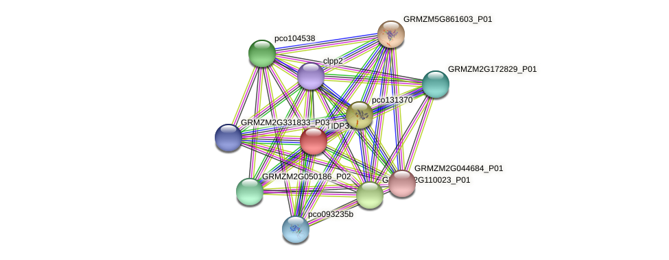 Zm.84781 protein (Zea mays) - STRING interaction network