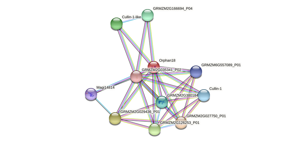 Orphan18 protein (Zea mays) - STRING interaction network