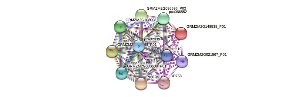 Zm.72651 protein (Zea mays) - STRING interaction network