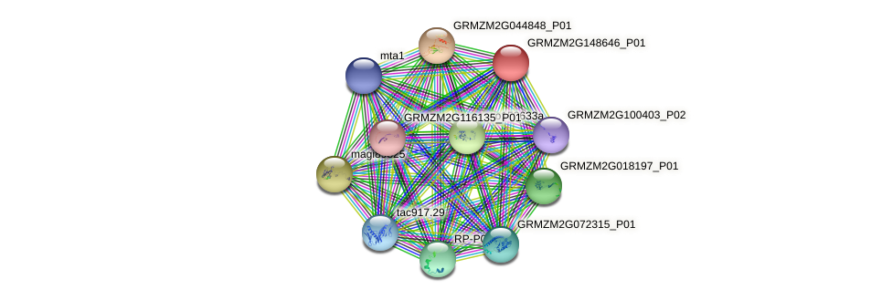 GRMZM2G148646_P01 protein (Zea mays) - STRING interaction network