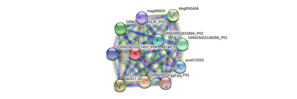 GRMZM2G148744_P01 protein (Zea mays) - STRING interaction network