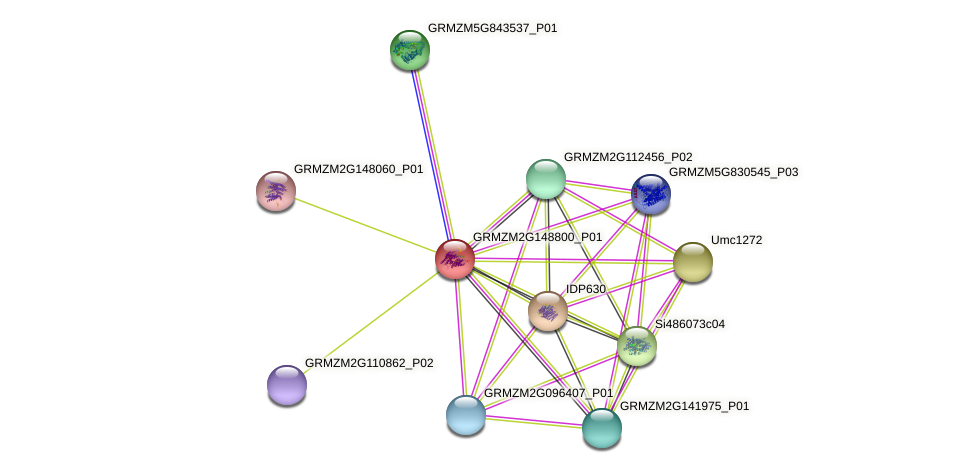 GRMZM2G148800_P01 protein (Zea mays) - STRING interaction network