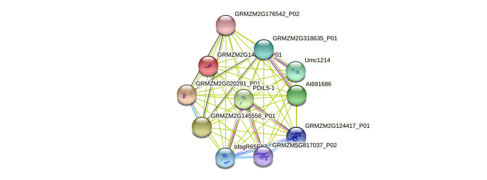 GRMZM2G148855_P01 protein (Zea mays) - STRING interaction network
