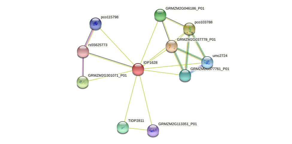 IDP1628 protein (Zea mays) - STRING interaction network