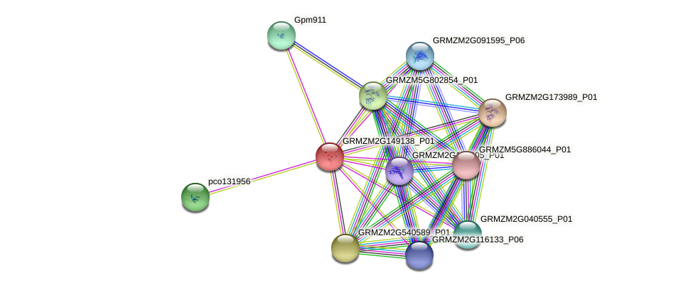 GRMZM2G149138_P01 protein (Zea mays) - STRING interaction network