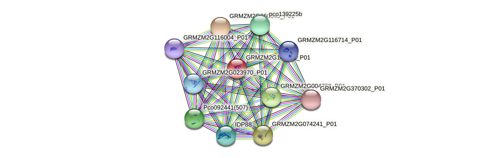 GRMZM2G149211_P01 protein (Zea mays) - STRING interaction network