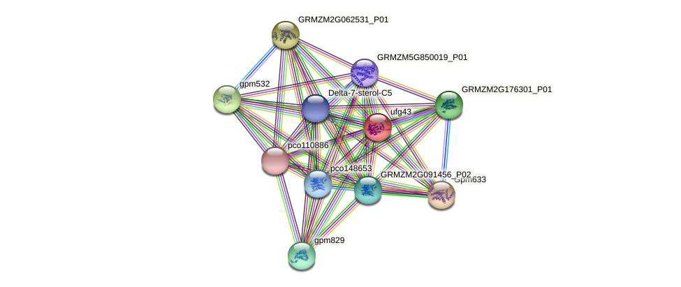 GRMZM2G149224_P01 protein (Zea mays) - STRING interaction network