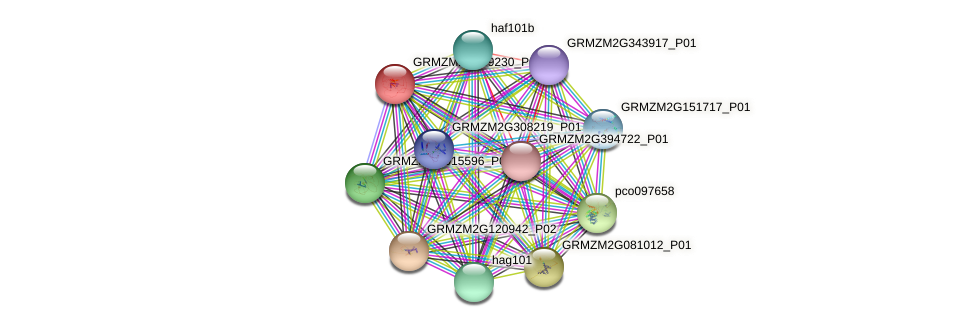 GRMZM2G149230_P01 protein (Zea mays) - STRING interaction network