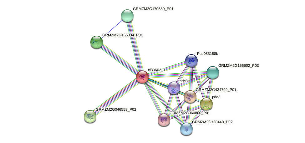 cl33662_1 protein (Zea mays) - STRING interaction network