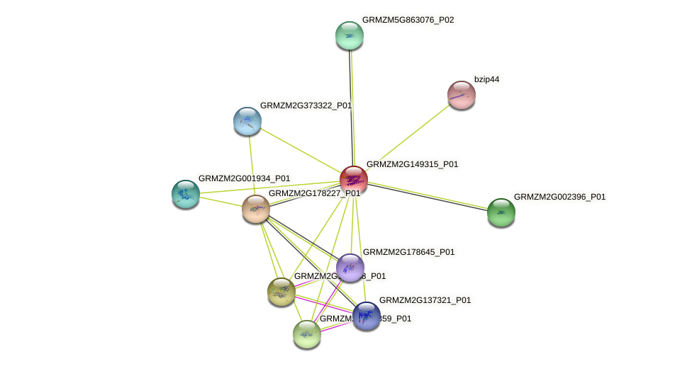 GRMZM2G149315_P01 protein (Zea mays) - STRING interaction network