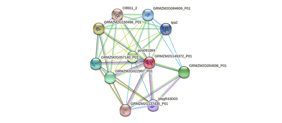 GRMZM2G149372_P01 protein (Zea mays) - STRING interaction network
