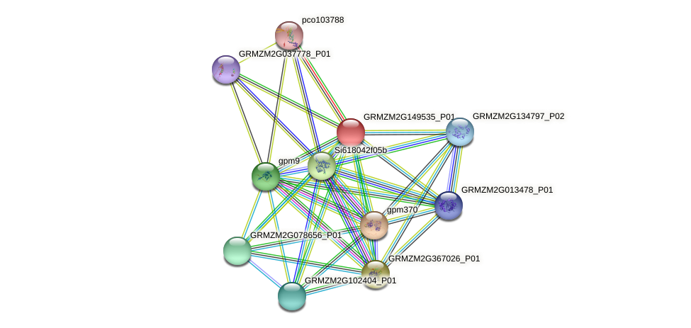 GRMZM2G149535_P01 protein (Zea mays) - STRING interaction network
