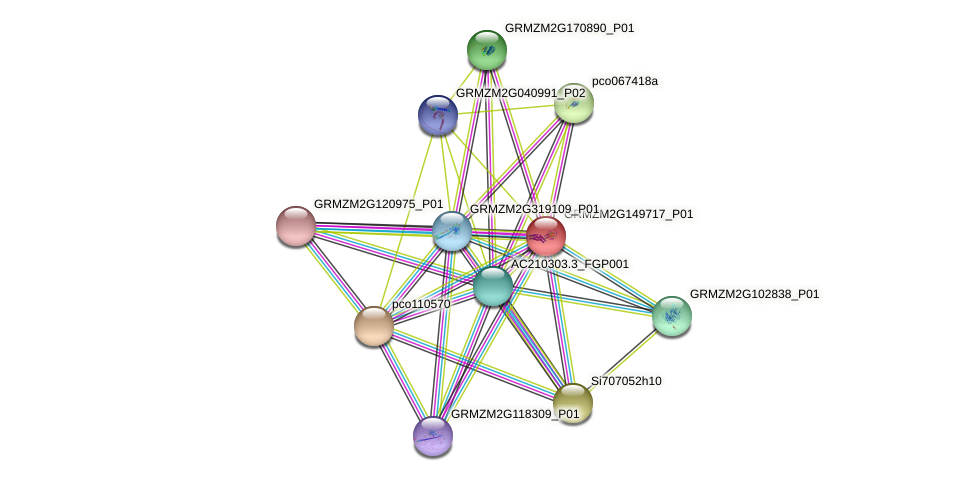 GRMZM2G149717_P01 protein (Zea mays) - STRING interaction network